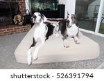Pair Of Great Danes On Dog Bed...