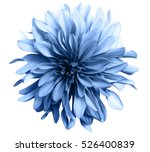 light blue flower on a white ... | Shutterstock . vector #526400839