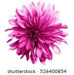 pink flower on a white ...   Shutterstock . vector #526400854