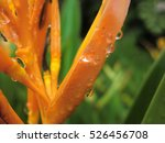 exotic plant water drop macro