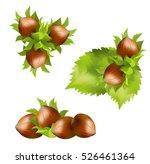 hazelnuts  corylus avellana ... | Shutterstock .eps vector #526461364