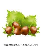 hazelnuts  corylus avellana ... | Shutterstock .eps vector #526461394