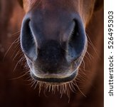 Close Up Of Horse's Nose Taken...