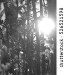 Small photo of Sun between plants, mystical ambiance with black and white