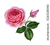 realistic rose in  watercolor.... | Shutterstock . vector #526528540