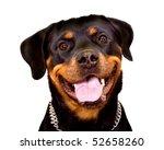 Portrait Of Rottweiler Dog...