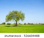 Tree In The Field