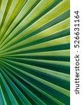 Green Palm Leaf Close Up  Macr...