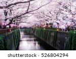 sakura blossoms | Shutterstock . vector #526804294