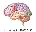 human brain anatomy structure ... | Shutterstock . vector #526850140