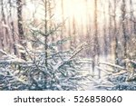 Winter Fir Tree