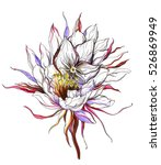 white cactus queen of the night ... | Shutterstock . vector #526869949