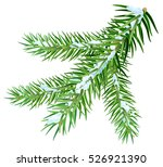 snow lies on spruce branch.... | Shutterstock . vector #526921390