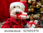 Dog With Christmas Gifts On Re...