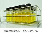 anaerobic bacteria culture and... | Shutterstock . vector #527059876