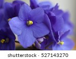 Close Up Of The Violets Flowers