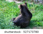 an hungry big brown bear in the ... | Shutterstock . vector #527173780