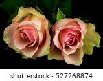 close up of bouquet pastel... | Shutterstock . vector #527268874