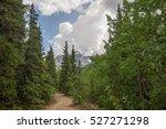 Hiking Trail In Alaska