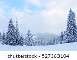 green nice new year fir trees... | Shutterstock . vector #527363104