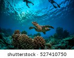 coral reef with turtle... | Shutterstock . vector #527410750