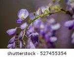 Close Up Of A Wisteria Flower...