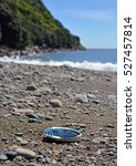 Small photo of Paua (Abalone) shell washed up on the Kapiti Island Beach.