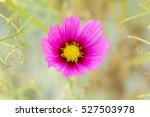 single pink flower | Shutterstock . vector #527503978