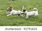 Stock photo two happy running dogs on green grass 52751623