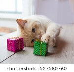 Stock photo white funny playful young cat playing with christmas toys for christmas 527580760