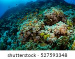 Tropical Fish On Background Of...