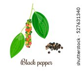 blossoming black pepper with... | Shutterstock .eps vector #527631340