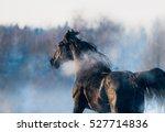 black horse winter portrait in... | Shutterstock . vector #527714836