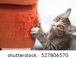 Stock photo kitten scratching orange fabric sofa 527806570