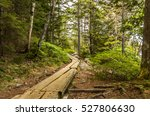 Wooden Plank Path Through The...