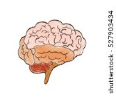 human brain mind icon vector... | Shutterstock .eps vector #527903434