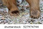bear feet   Shutterstock . vector #527974744