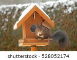 brown squirrel eating at the... | Shutterstock . vector #528052174