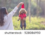 Stock photo toy poodle playing with its female master in a park 528086950