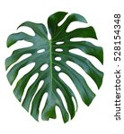 Small photo of Monstera large leaf tropical jungle pattern, isolated on white background.