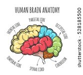 main parts of the human brain.... | Shutterstock . vector #528185500
