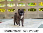black pomeranian dog on marble... | Shutterstock . vector #528193939