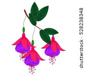 The Branch Of Fuchsia.