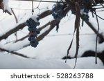 Vineyards In Winter  Bunch Of...
