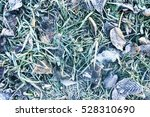 Frozen Leaves And Grass. Top...