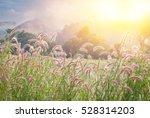 Grass Flower Field With Soft...