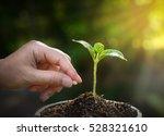 planting seed in soil   Shutterstock . vector #528321610