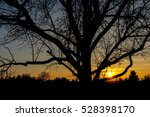 section of single tree in front ... | Shutterstock . vector #528398170