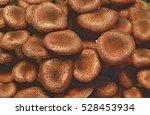 Close Up Of Honey Fungus