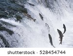 group of salmon jumping... | Shutterstock . vector #528454744